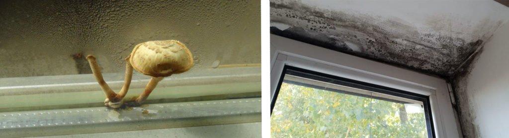 почему потеют пластиковые окна изнутри в частном доме
