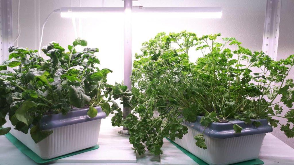 Светодиодные фитолампы для растений