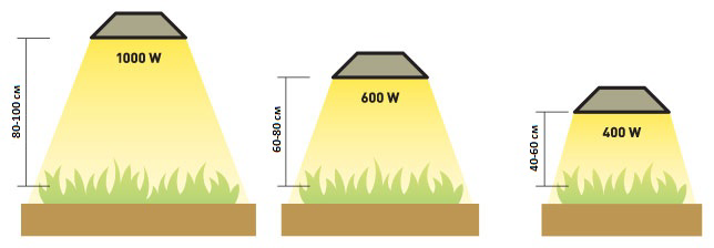 Расстояние от лампы до растений