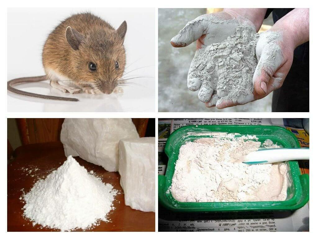 Зола от мышей