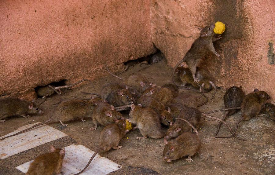 Мыши в подвале